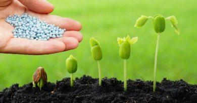 Fertilizing seedlings